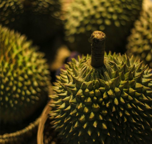 durian-04