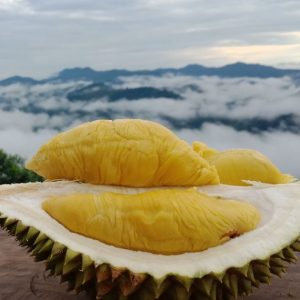 Mao Shan Wang Durian | Tip Top Durian Delivery | Singapore Top Fresh Durian Online Delivery